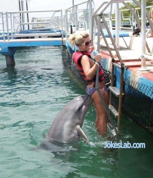 funny dolphin chasing a woman