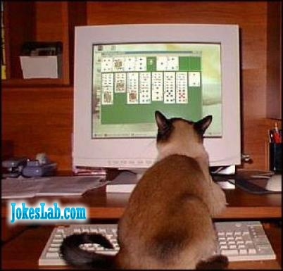 funny dog playing games