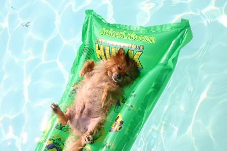 funny dog enjoying sunbath