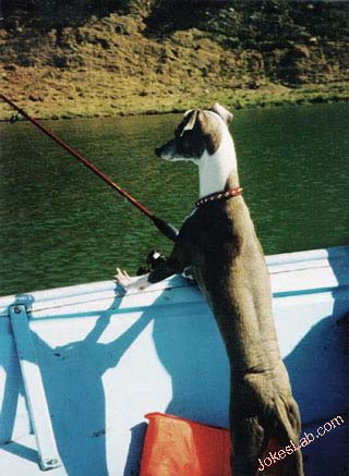 funny picture, fishing dog