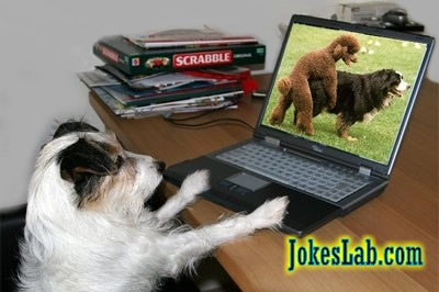 funny picture, a bad dog is watching porn