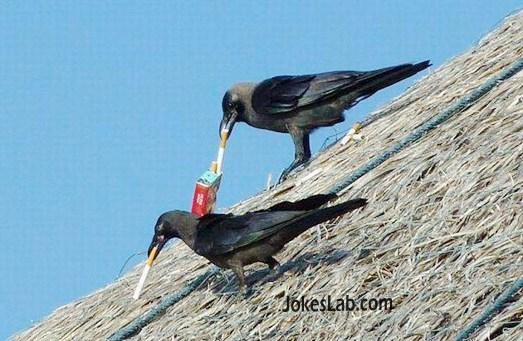funny birds smoking