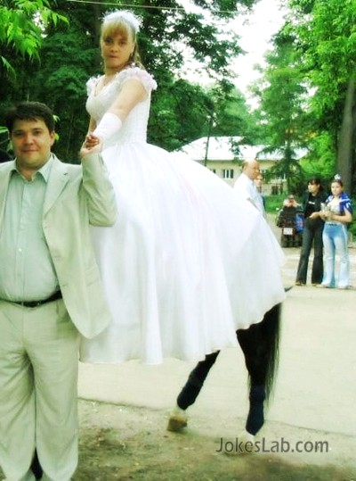 funny wedding photo, horse's legs