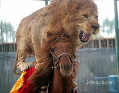 funny lion's horse ride