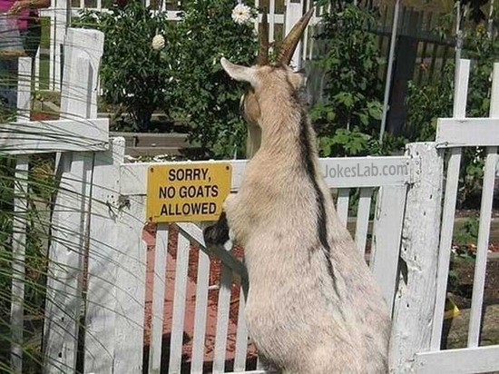funny sign, sorry goat is not allowed.