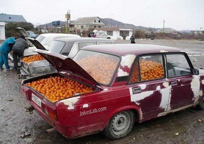 funny tomato car