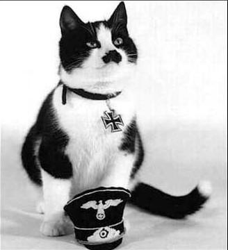 funny cat, like Hitler,