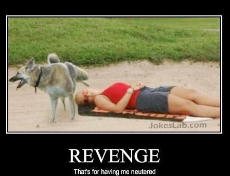 funny dog peeing on the woman, revenge for being neutered