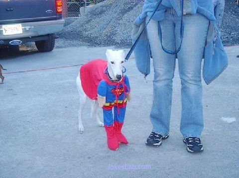 funny dog clothing, funny all-in-one, horse, dwarf, girl, dog walk