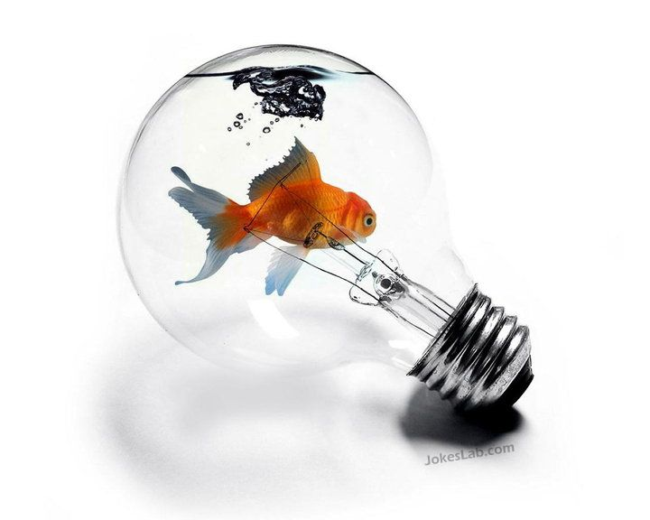 funny bulb with fish and water inside