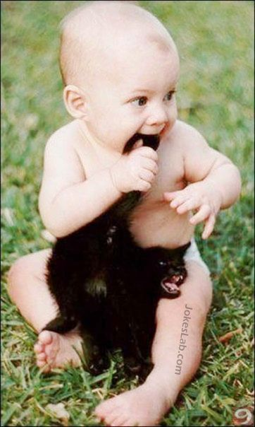 funny child biting a cat