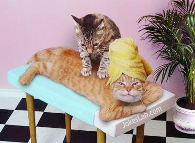 funny-cat-massage