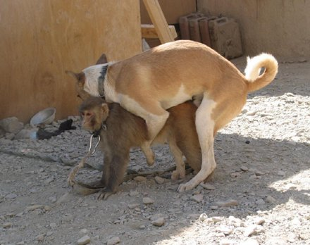 dog-has-sex-with-monkey