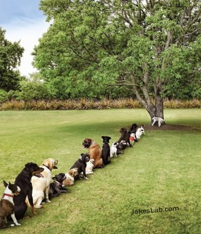 funny-dogs-queue-for-peeing-on-a-tree