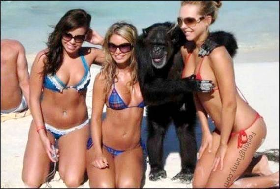 funny-gorilla-enjoying-the-breast