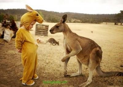 funny-kangaroo
