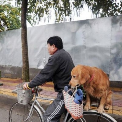 funny-dog-taking-bag-on-bicycles