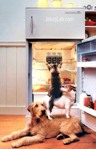 funny-dogs-team-work-to-get-beer-from-refrigerator