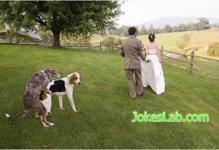 photo bomb, dog knows wedding means making love..