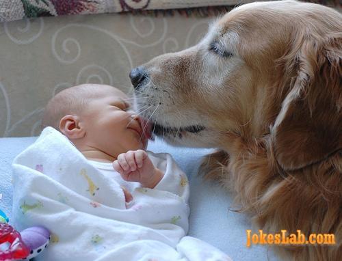 funny dog kisses a child