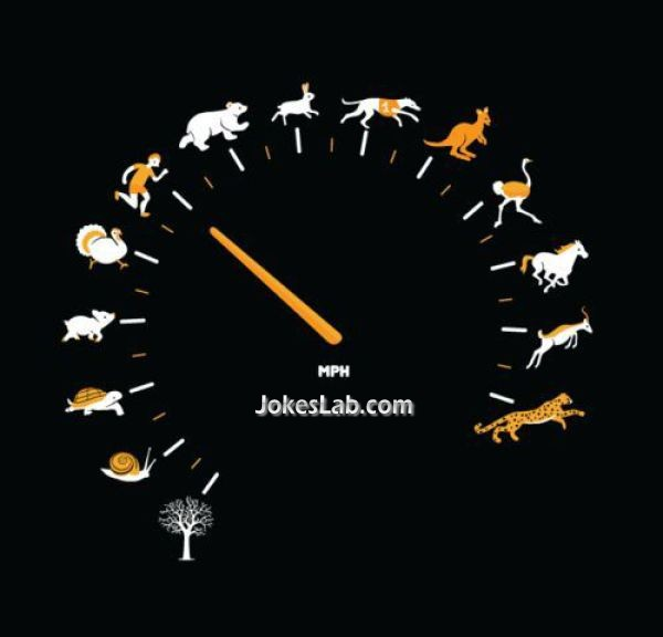 funny animal speedometer