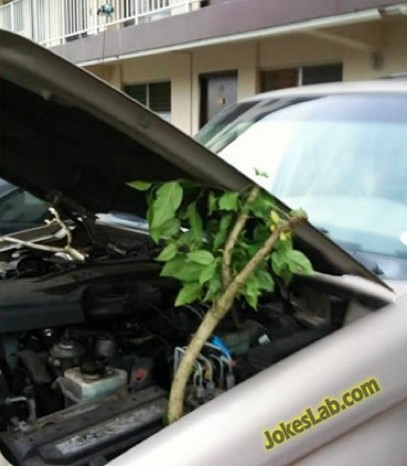 funny car bonnet opener, use a tree