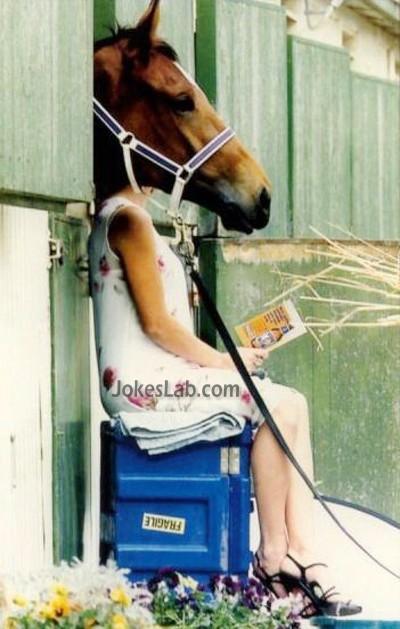 photo bomb, horse's face