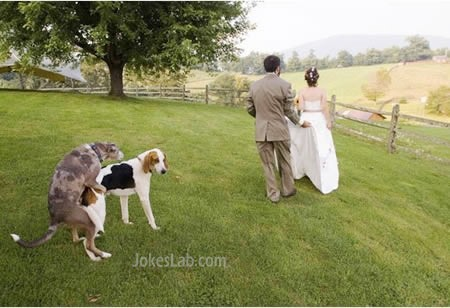 funny photo bomb, mating dogs, wedding photo