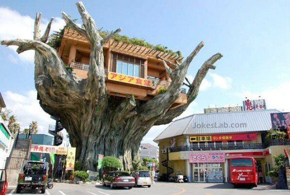 funny Japanese house, on the tree
