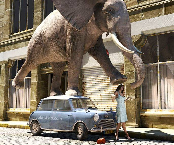 funny elephant walk, woman and car