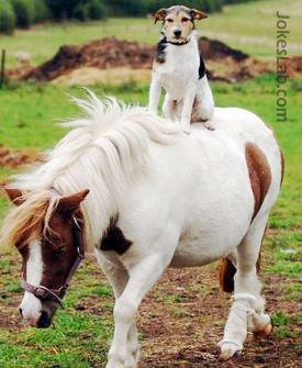 funny horse ride by a dog