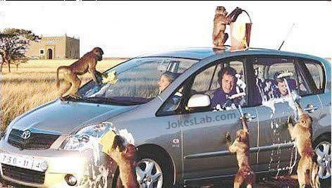 funny monkey car washing