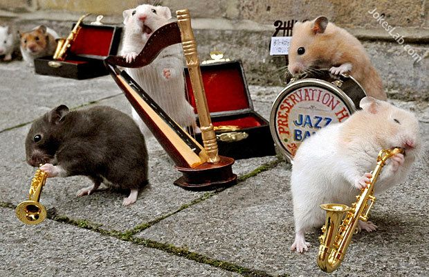 funny mice concert, mice playing music instruments