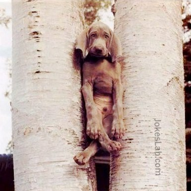 funny-dog-trapped-in-tree