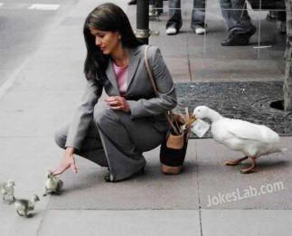 funny-duck-thief