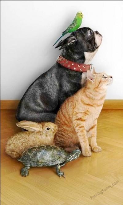 interspecies-friendships