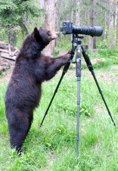 bear-playing-camera