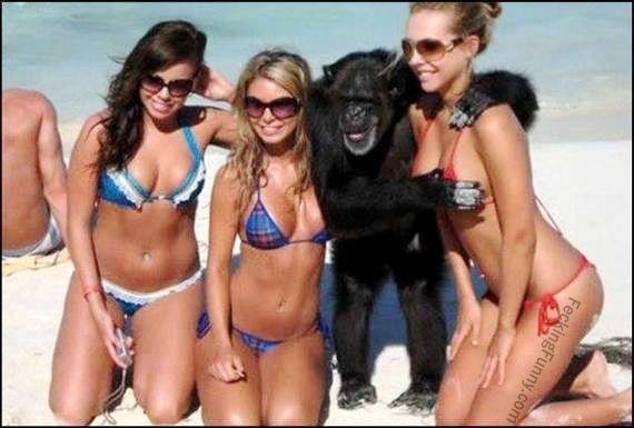 funny-gorilla-enjoying-the-breast