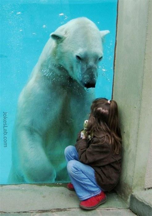 funny-polar-bear-and-girl